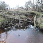Dam of logs